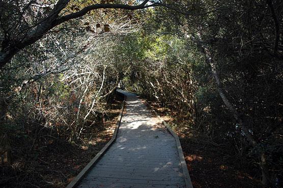 Hyatt Myrtle Beach >> Edisto Beach, Huntington Beach, and Hunting Island State