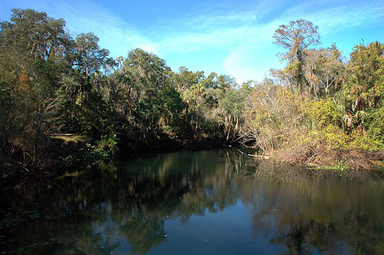Hillsborough River View 2