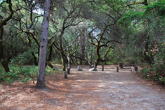 Henry-Cowell_065
