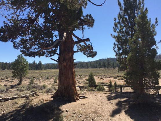 Holcomb-Valley-Hangmans-Tree