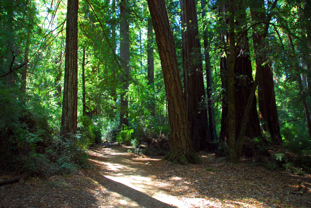 Big-Basin-Redwoods-State-Park