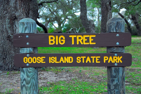 Big-Tree-Sign