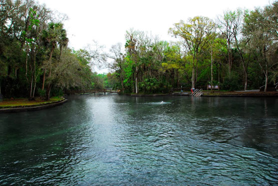 Wekiwa-Springs-Swim-Area-2