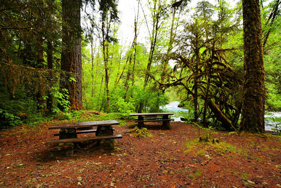 McKenzie-Bridge-Picnic-Area