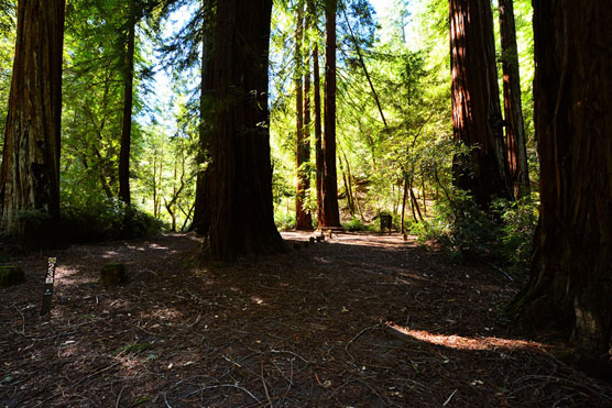 Richardson-Grove_023