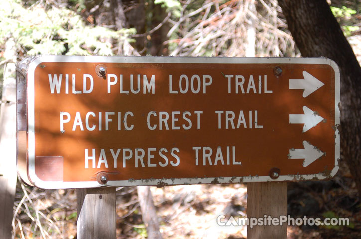 Wild Plum Trails