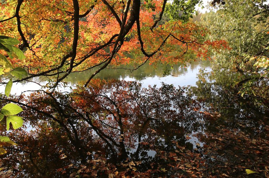 John James Audubon State Park Fall Colors_CampsitePhotos.com
