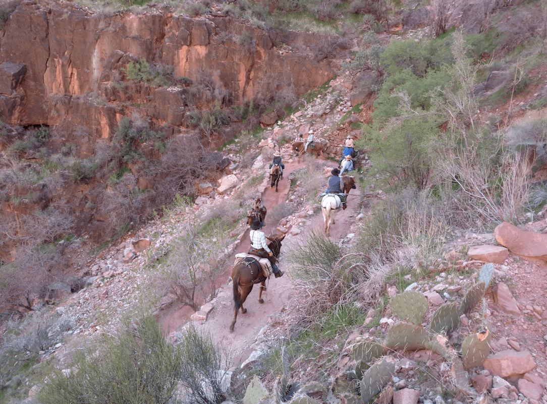 Bright Angel Campground Bright Angel Trail Mules