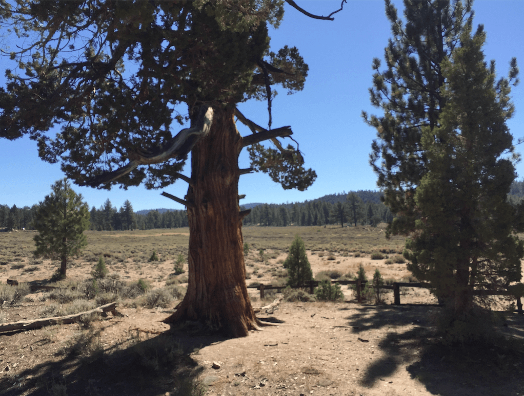 Big Bear Lake Area Campgrounds - Holcomb Valley Hangman Tree