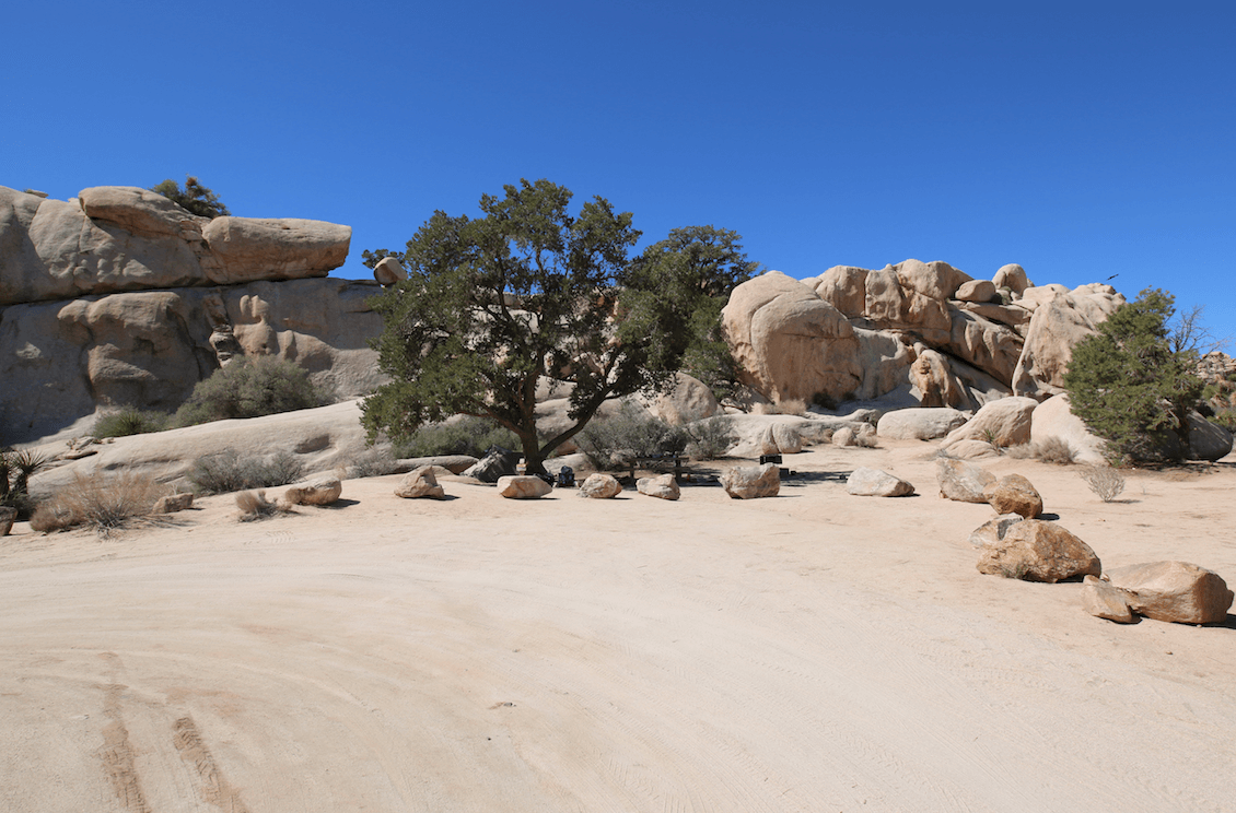 Joshua Tree National Park's Best Campsites - The Secret One