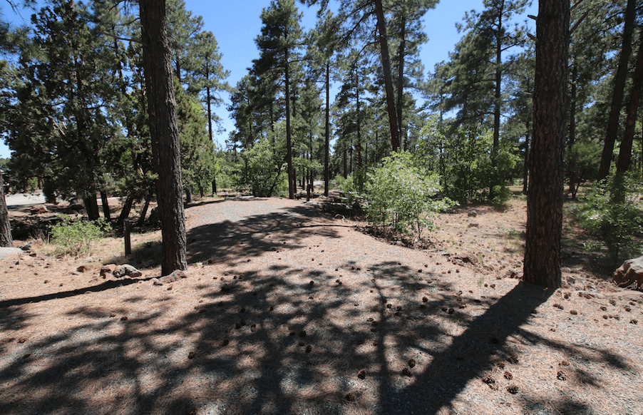 Prescott Area Campgrounds Mingus Mountain 12