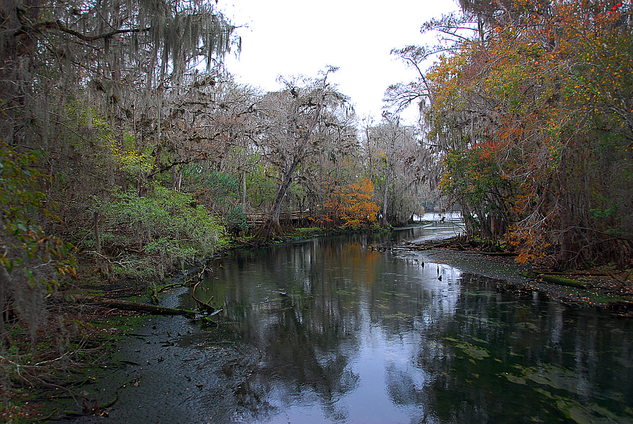 The Legend of Florida's Moss Man -Manatee Springs State Park View