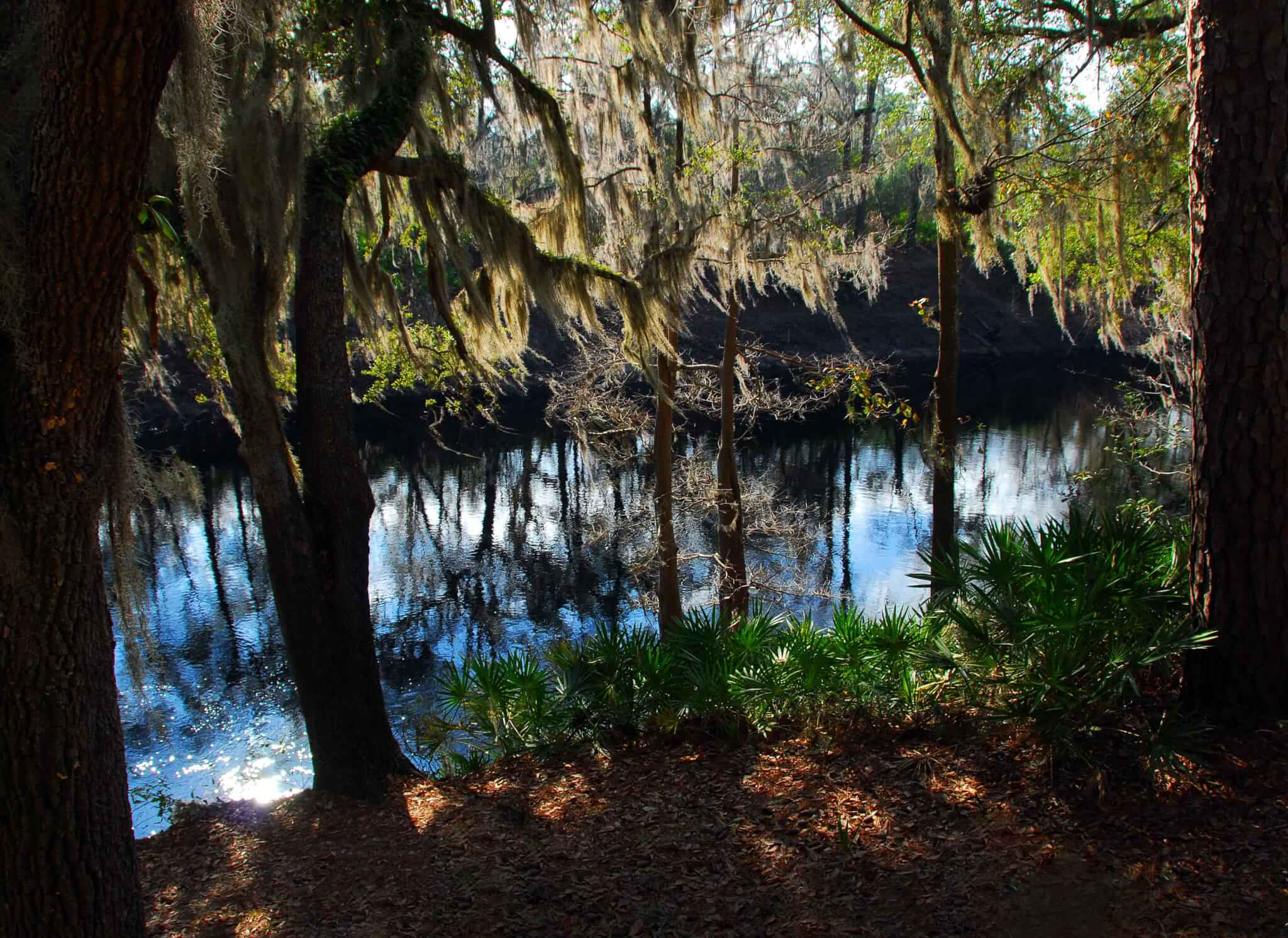 The Legend of Florida's Moss Man - Suwannee River