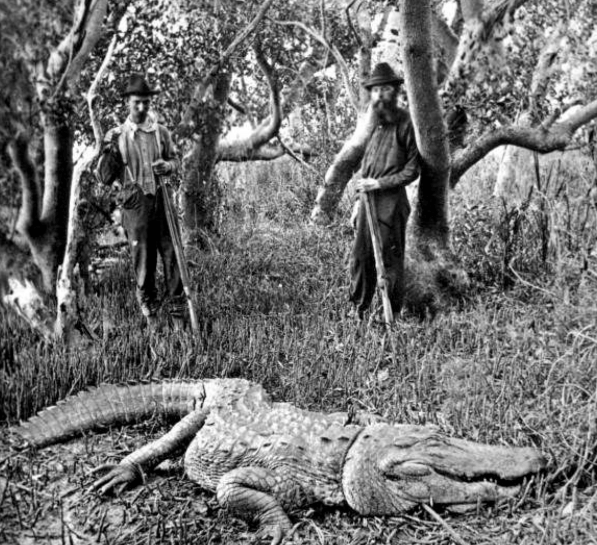 The Legend of Florida's Moss Man - Posse Hunt